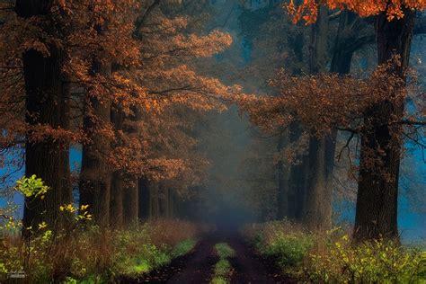espectaculares fotos de bosques en otono