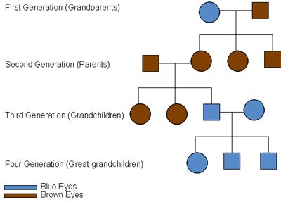 what hair color is dominant which eye color is dominant punnett square dominant and