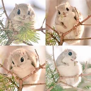 7 Incredibly Adorable Animals Unique to Hokkaido, Japan