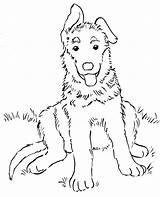 Shepherd Coloring German Puppy sketch template