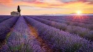 Lavendel Pflanzen Im Topf : lavendel pflanzen kaufen lavendel kaufen lavendel ~ Michelbontemps.com Haus und Dekorationen