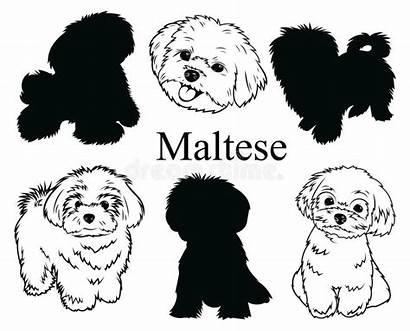 Maltese Dog Clip Hond Animal Cane Een