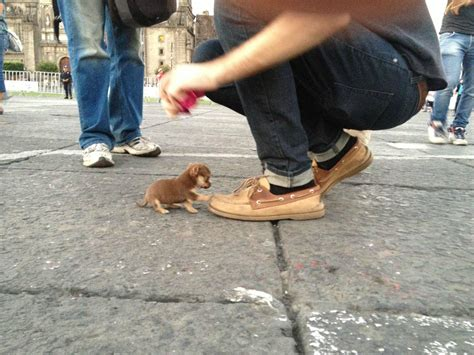 Tiny Dog Meets Giant Shoe In New Mexico (PHOTO) | HuffPost