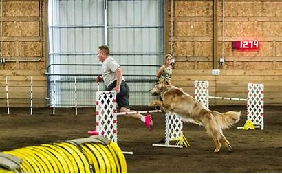 Agility Dogs Jump Trials Gifs Golden Breeds