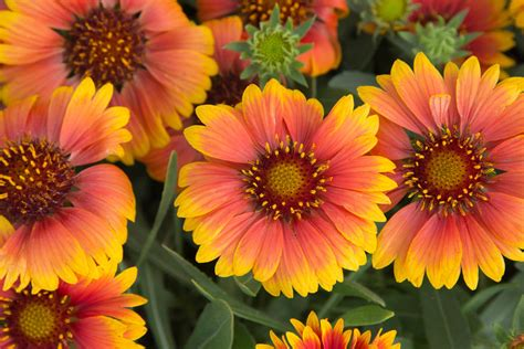 9 plants that attract bees southern living