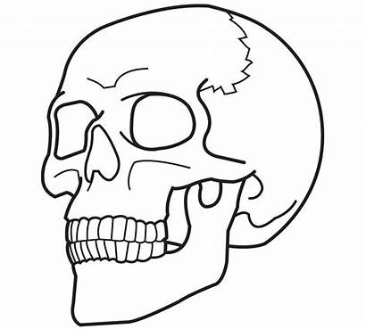 Skull Coloring Pages Skulls Printable Bestcoloringpagesforkids Human