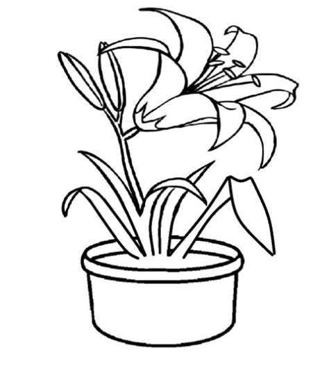 paling keren 20 gambar sketsa bunga dalam pot