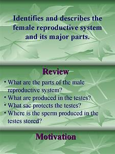 Function Of Female Reproductive System
