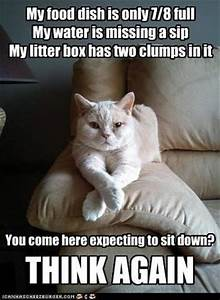 Crazy, Lazy, Silly and Strange: Cat Captions...