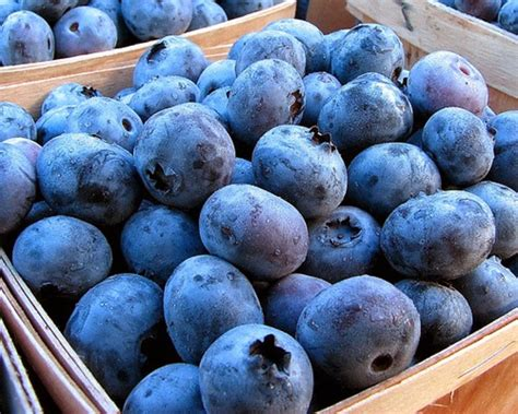 How To Grow Blueberries In Pots And Containers |the Garden