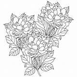 Coloring Bouquet Peony Pages Vector Hand Adults Drawn Artwork Bohemia Flowers Floral Drawing sketch template