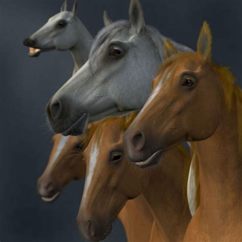 emotions horse