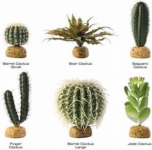 Exo Terra : Desert Ground Plants