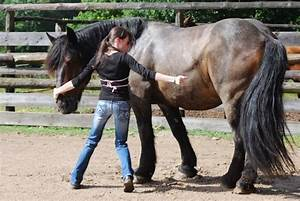 Combien De Chevaux : combien p se vos chevaux 1 forum cheval ~ Medecine-chirurgie-esthetiques.com Avis de Voitures