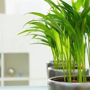Pflanzen Die Wenig Licht Brauchen Heißen : zimmerpflanzen das gr ne medienhaus ~ Markanthonyermac.com Haus und Dekorationen