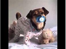 Süßer Hund Mit Schnuller YouTube