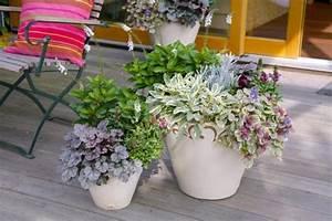 herbstbepflanzung fur balkon und terrasse mein schoner With französischer balkon mit zierbaum garten winterhart