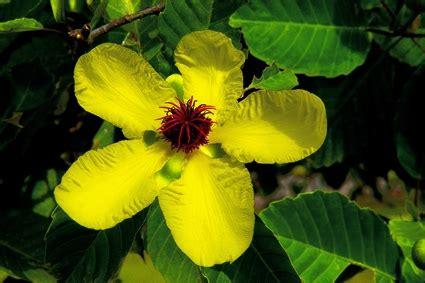 bunga nasional sepuluh negara asean blog