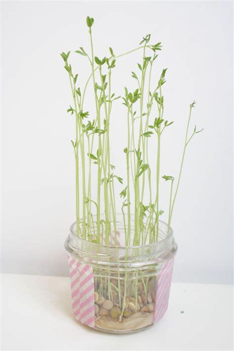 diy petites plantes d int 233 rieur 224 faire pousser soi m 234 me cactus fils et maison