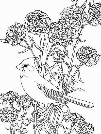 Coloring Flowers Pages Bird Birds Among Printable
