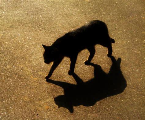 Cat's Shadow By Loonyann On Deviantart