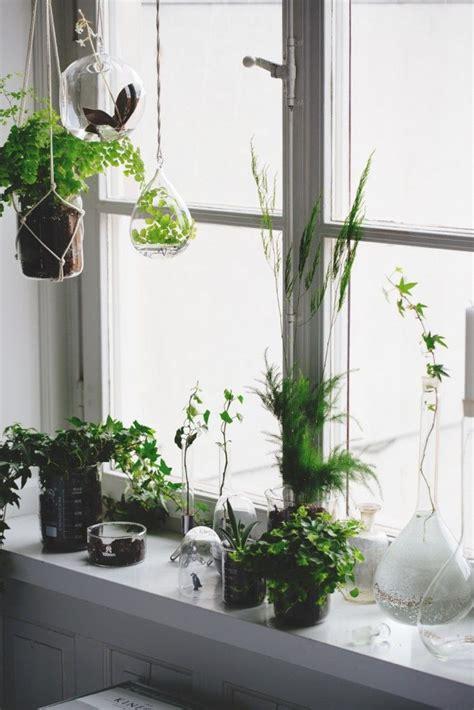 Best Indoor Window Sill Plants by Best 25 Kitchen Window Sill Ideas On Window