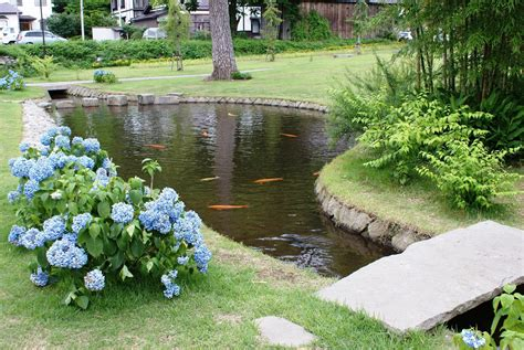 Garden Pond Fish Is Very Effectively Looked In The Water