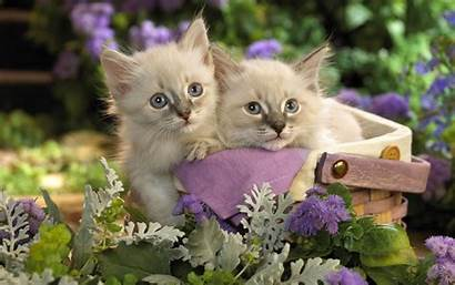 Wallpapers Animals Lovely Cats Animal Cat Flowers