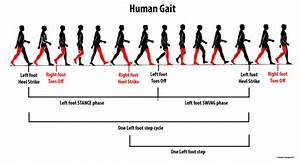 Phases In Human Gait  The Swing Phase  As The Name