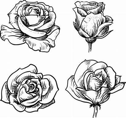 Colorear Flores Dibujos Thinkstock Istock Popmarleo