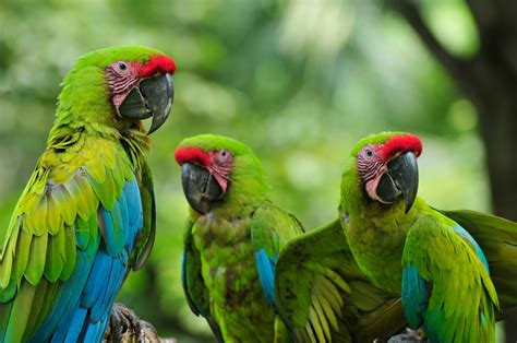 Tropical Animal Wallpaper - tropical animals wallpapers 46 wallpapers adorable