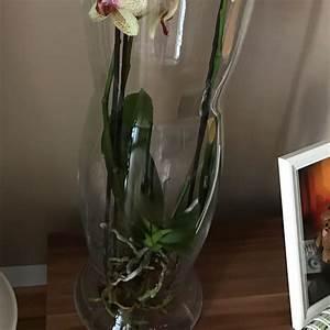 Orchideen Im Glas : orchidee im glas wie und vor allem wie oft d ngen ~ A.2002-acura-tl-radio.info Haus und Dekorationen