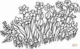 Garden Flowers Coloring Pages Printable Flower Gardens sketch template