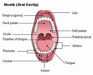 Mouth assessment - Wikipedia