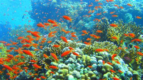 Download Fish 1080p 1920x1080 Hd Wallpaper