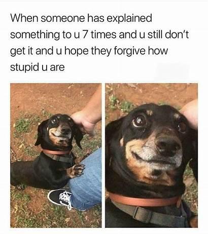 Dachshund Meme Memes Someone Mean Totally Explained