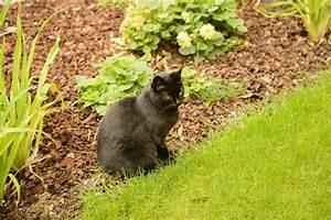 Repulsif Pour Urine Chat : r pulsifs naturels contre les chats conomie solidaire ~ Melissatoandfro.com Idées de Décoration