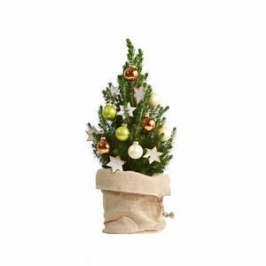 Blumen Zu Weihnachten : blumen zu weihnachten blumenversand online ~ Eleganceandgraceweddings.com Haus und Dekorationen