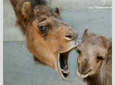 Zoo Lustige Tiergesichter – Berlinde