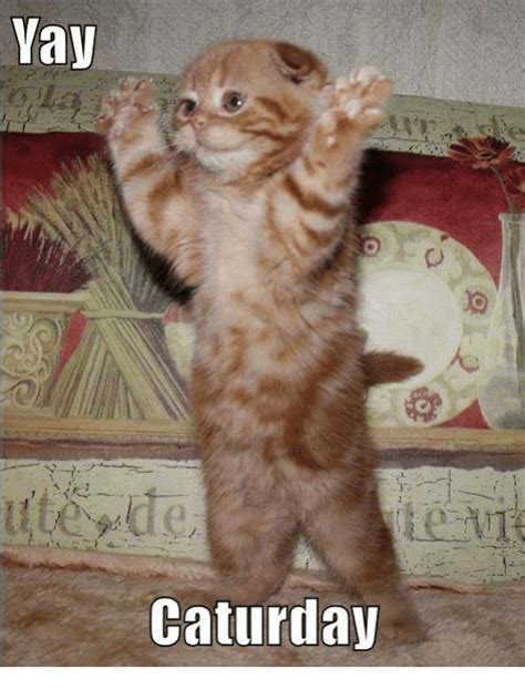 Caturday Meme - funny caturday memes of 2017 on sizzle cats