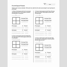 Punnett Square Practice By Teachinsci  Teaching Resources