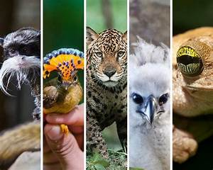 Meet 17 amazing Amazon animals | Peru For Less
