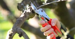 Wann Müssen Apfelbäume Geschnitten Werden : olivenbaum schneiden mein sch ner garten ~ Lizthompson.info Haus und Dekorationen