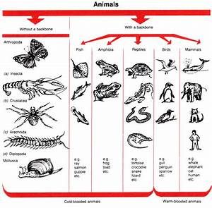Chart of Vertebrates and Invertebrates | Places to Visit ...