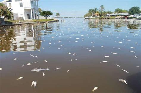 Phosphorus Pollution Surging In Florida Waterways And ...