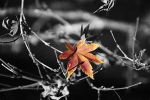 Papier Peint Arbre Noir Et Blanc : images gratuites fleur abstrait fleur fond flore feuille d 39 rable branche l 39 automne ~ Nature-et-papiers.com Idées de Décoration