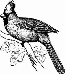 Bird Line Drawing - ClipArt Best