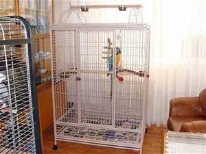 Cage A Perroquet : forum nouvelle cage constructions ~ Teatrodelosmanantiales.com Idées de Décoration
