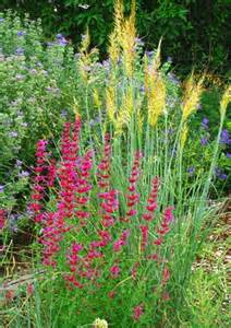 Ornamental Grass Companion Plants