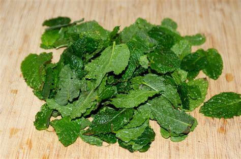 planification cuisine conserver sécher congeler et utiliser la menthe récoltée au potager